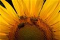 Bees around the sun