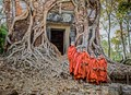 Tree roots & novice monks