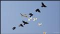 Fight or Flight - Craw vs Hawk