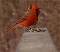 Cardinals........