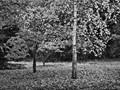 Woodland stillness