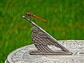 Dragonfly discovers limitations of a sun dial on a cloudy day