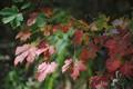 Autumn 065