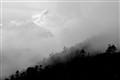 Early Morning Fog in Bhutan