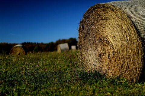 Hay Ready for Winter