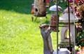 Upright squirrel