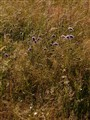 grass, dry season