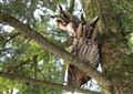 Sove - Owls