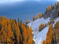 101617 Larch Forests
