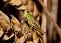 Ahhh, Grasshopper