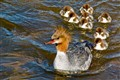 On a golden pond