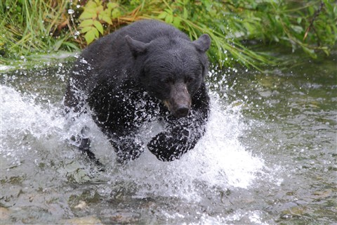 bears2 022