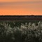 Camargue end of the day