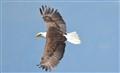 Americas Symbol of Freedom