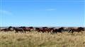Patagonia: Wild horses