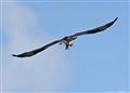 FREEBIRD BASE