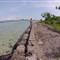 Coconut Island 2
