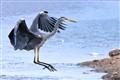 HeronLanding