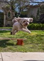 Luna leaping