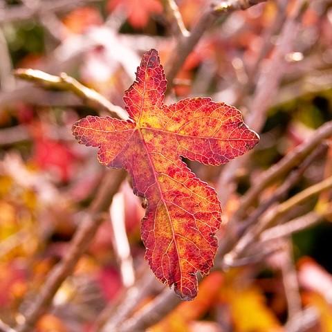 1 leaf
