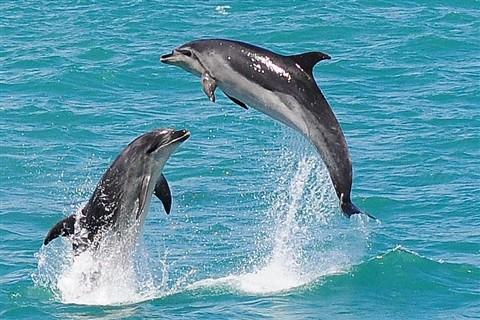 Sea acrobats in action