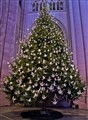 The Peace Tree-St. John the Divine