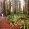 _20111006_1093_redwoods