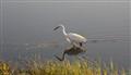 Lonely walk in the Chobe River - Botswana