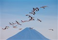 South America-Chile-Soncor flamingo reserve
