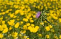 102-268 Spring Flowers