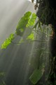 """""""Mist-ical"""" Jungle"""