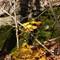 Leaves on Rock: