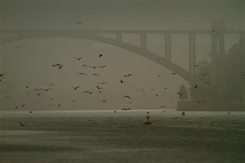 Gulls in the fog