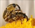 Weevil Romance