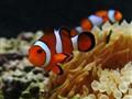 Nemo's Dad