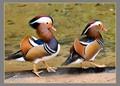 Birds  at Brazil