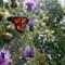 Sunlight and Wings: OLYMPUS DIGITAL CAMERA