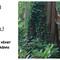 hemsida-supcypress-380cm-storsta-alnarp-