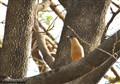 Guarding near nest