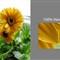 flower screen size