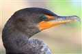 130130_Birds__MG_9036-20130130-NWFPC