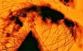 Macro in flames