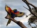 Vibrant Feathers