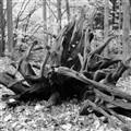 Wood 1 - 2011-11-13 v1