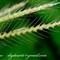 Grassseeds03