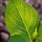 leaf in light (1 of 2)