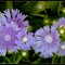 flower_0731