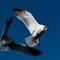 Gulls_2_WJD9420