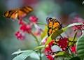 Butterfly Blur