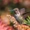 IMG_3611-Hummingbird